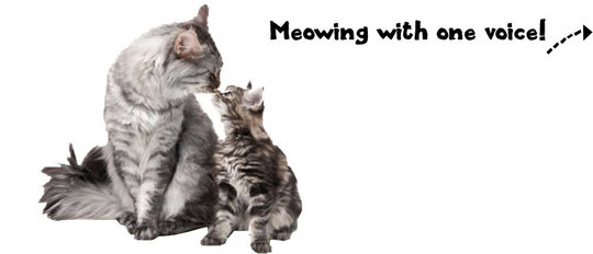 planet-pet-kattenvoer