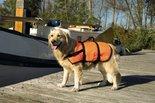 Veiligheidsvest-Zwemvest-Maat-XL-+41-kg